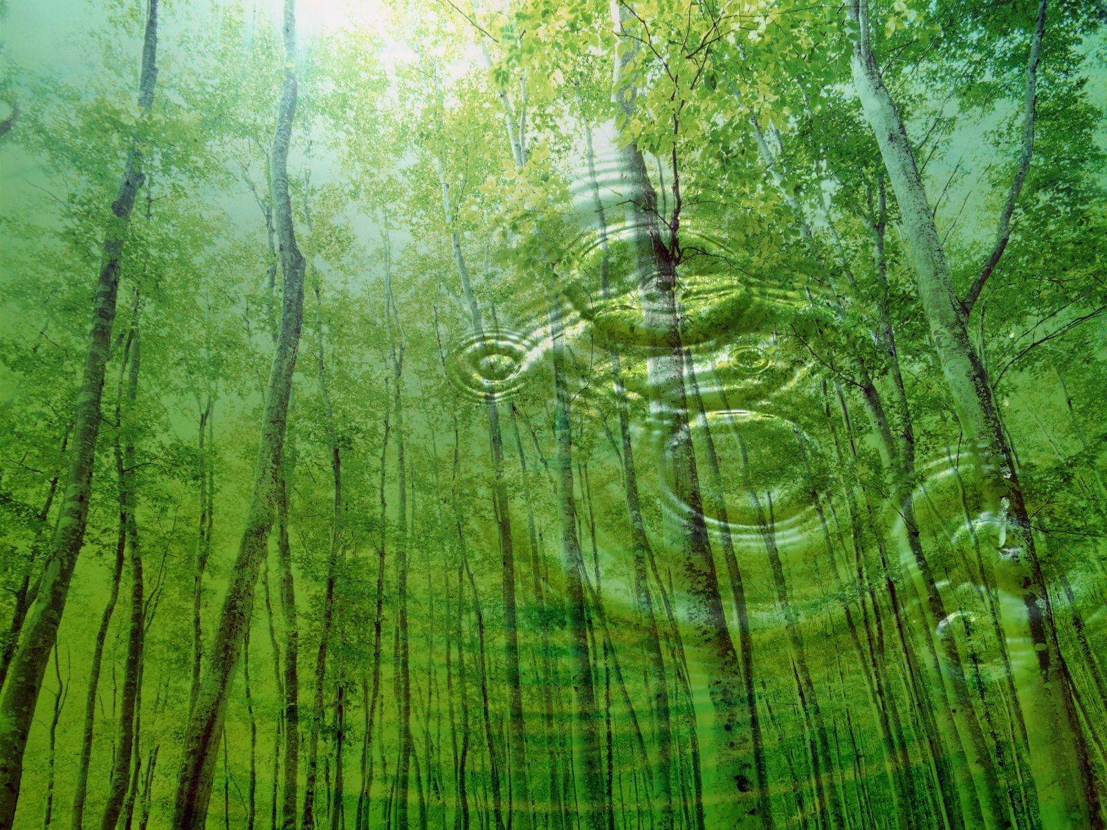 natura_gocce_alberi